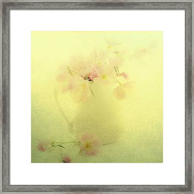 Primrose In Pastel Framed Print by Linde Townsend