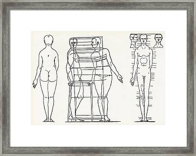 Proportions Of The Human Body Framed Print by Sheila Terry