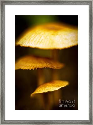 Psychedelic Mushroom Framed Print by Melle Varoy