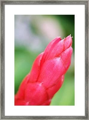 Pua Framed Print by Kauwela Kaia