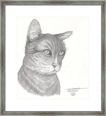Pugnosed Cat Framed Print by William Deering