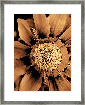Pull To The Center Framed Print by Beth Akerman
