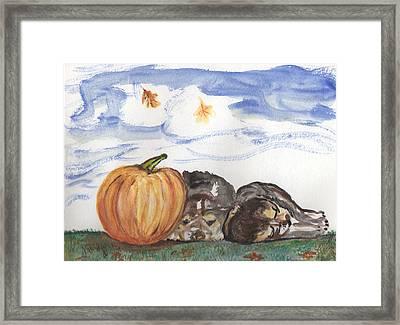 Pumpkin And Puppies Framed Print by Pamela Wilson