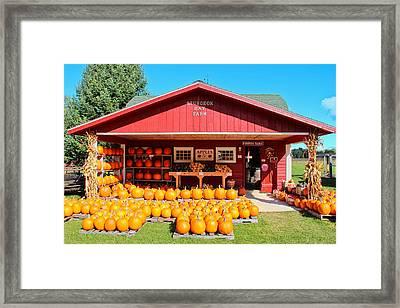 Pumpkin Barn Framed Print by Rachel Cohen
