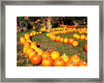 Pumpkin Patch Path Framed Print by Carol Groenen