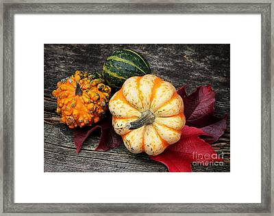 Pumpkin Still Life Framed Print by Jutta Maria Pusl