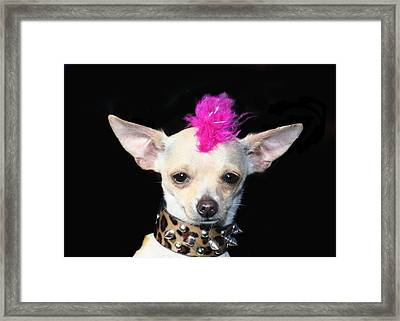 Punk Rock Chihuahua Framed Print by Ritmo Boxer Designs