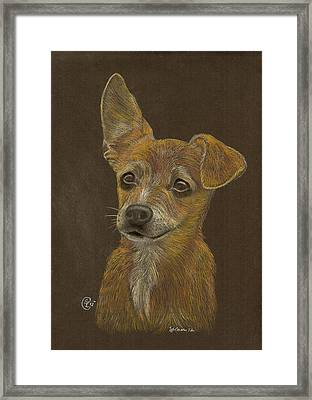 Pup Framed Print by Stephanie L Carr
