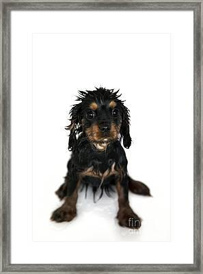 Puppy Bathtime Framed Print by Jane Rix