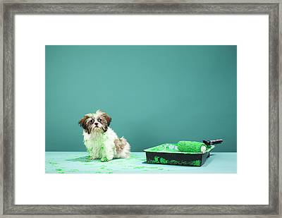 Puppy Covered In Green Paint From Paint Tray Framed Print by Martin Poole