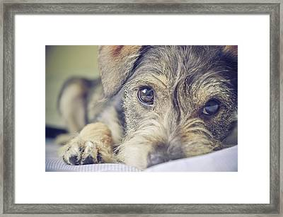 Puppy Dog Framed Print by Emily Hall Photography