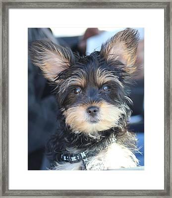 Puppy Eyes Framed Print by Static Studios