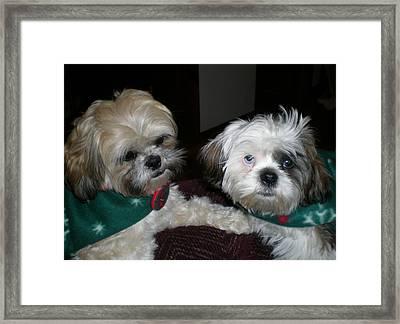 Puppy Love Framed Print by Sherry Hunter