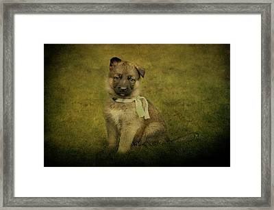 Puppy Sitting Framed Print by Sandy Keeton