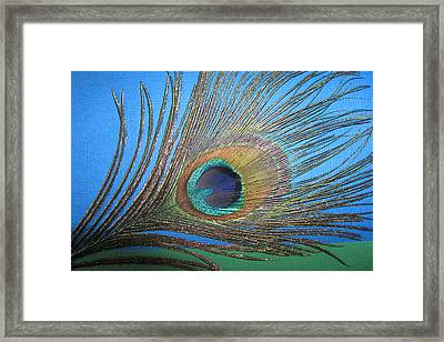 Purdy As A Peacock Framed Print by Kathy Clark