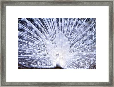 Pure Framed Print by Eric Chapman