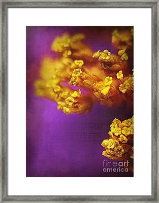 Purple And Gold 2 Framed Print by Judi Bagwell