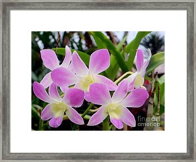 Purple Balinese Flower Framed Print by Samantha Mills