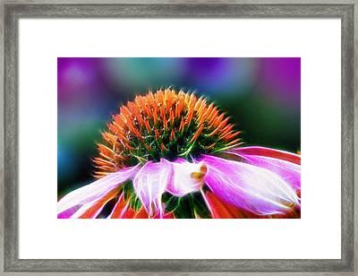 Purple Coneflower Delight Framed Print by Bill Tiepelman