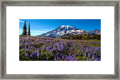 Purple Fields Forever Framed Print by Mike Reid