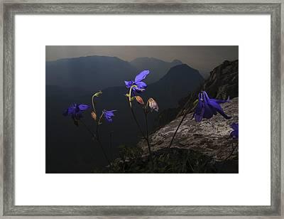 Purple Flames Framed Print by Fernando Alvarez