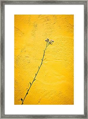 Purple Flower Framed Print by Anya Brewley schultheiss