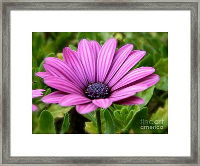 Purple Flower Framed Print by Sara  Mayer