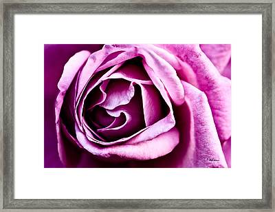 Purple Folds Framed Print by Christopher Holmes
