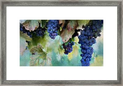 Purple Grapes Framed Print by Susan Holsan