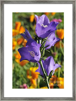 Purple Harebell Flowers Framed Print by Gary Whitton