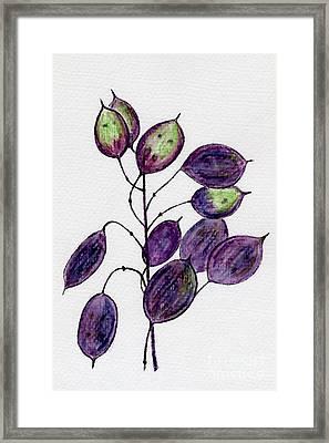 Purple Honesty Seed Heads Framed Print by Barbara Moignard