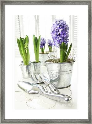 Purple Hyacinths On Table With Sun-filled Windows  Framed Print by Sandra Cunningham