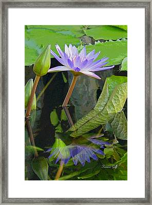 Purple Lotus Framed Print by Suzanne Gaff