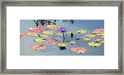 Purple Mirror Framed Print by