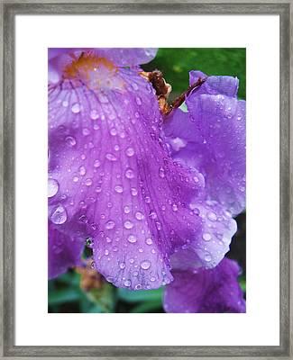 Purple Rain Framed Print by Todd Sherlock