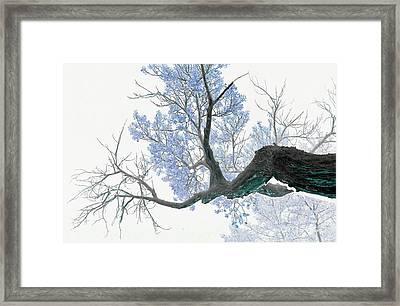 Purple Tree 1 Framed Print by Rebecca Margraf