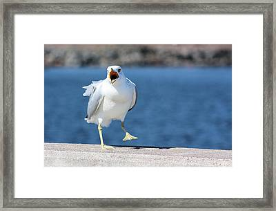 Putting His Foot Down Framed Print by Kristin Elmquist