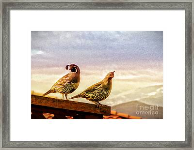 Quail And His Lady Framed Print by Phyllis Kaltenbach