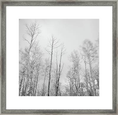 Quaking Aspens Above Santa Fe Framed Print by David Teter