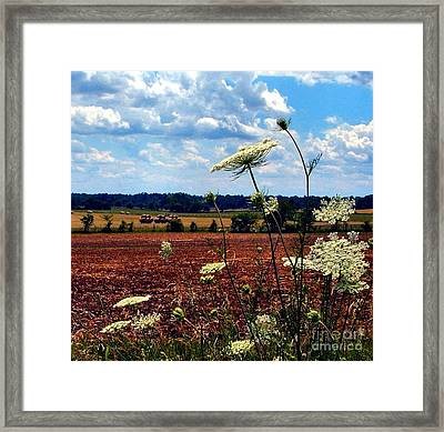 Queen Annes Lace And Hay Bales Framed Print by Julie Dant
