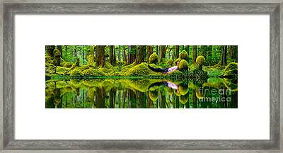 Queen Charlotte Island Swamp Framed Print by David Nunuk