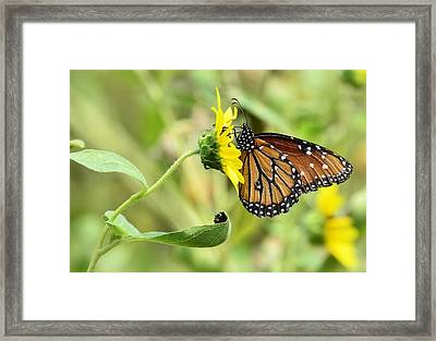 Queen For A Day  Framed Print by Saija  Lehtonen