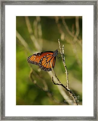 Queen On A Twig Framed Print by Lynda Dawson-Youngclaus