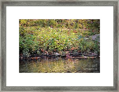 Quiet Moment Framed Print by Maria Urso