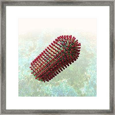 Rabies Virus 2 Framed Print by Russell Kightley