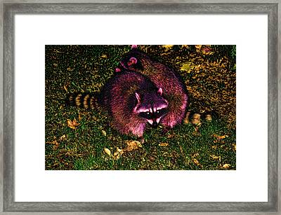 Racoons In Stanley Park Framed Print by Lawrence Christopher