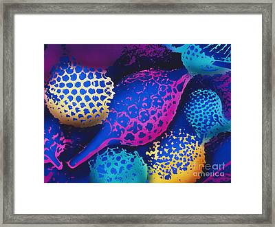 Radiolarians Framed Print by Omikron