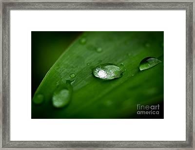 Rain Drops Framed Print by Melle Varoy