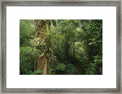 Rain Forest Tree With Bromeliad Plants Framed Print by Michael Melford