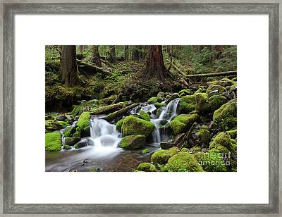 Rain Forest Waterfall Framed Print by Keith Kapple